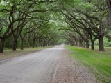 To Kill a Trademark Registration