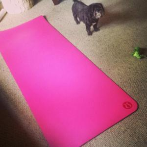 Belle with my new yoga mat I received for Valentine's Day.  Belle said it looked like a good one for many downward dogs.  I always take her advice on stuff like this.